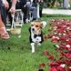 {Weddings} Puppy Love and More